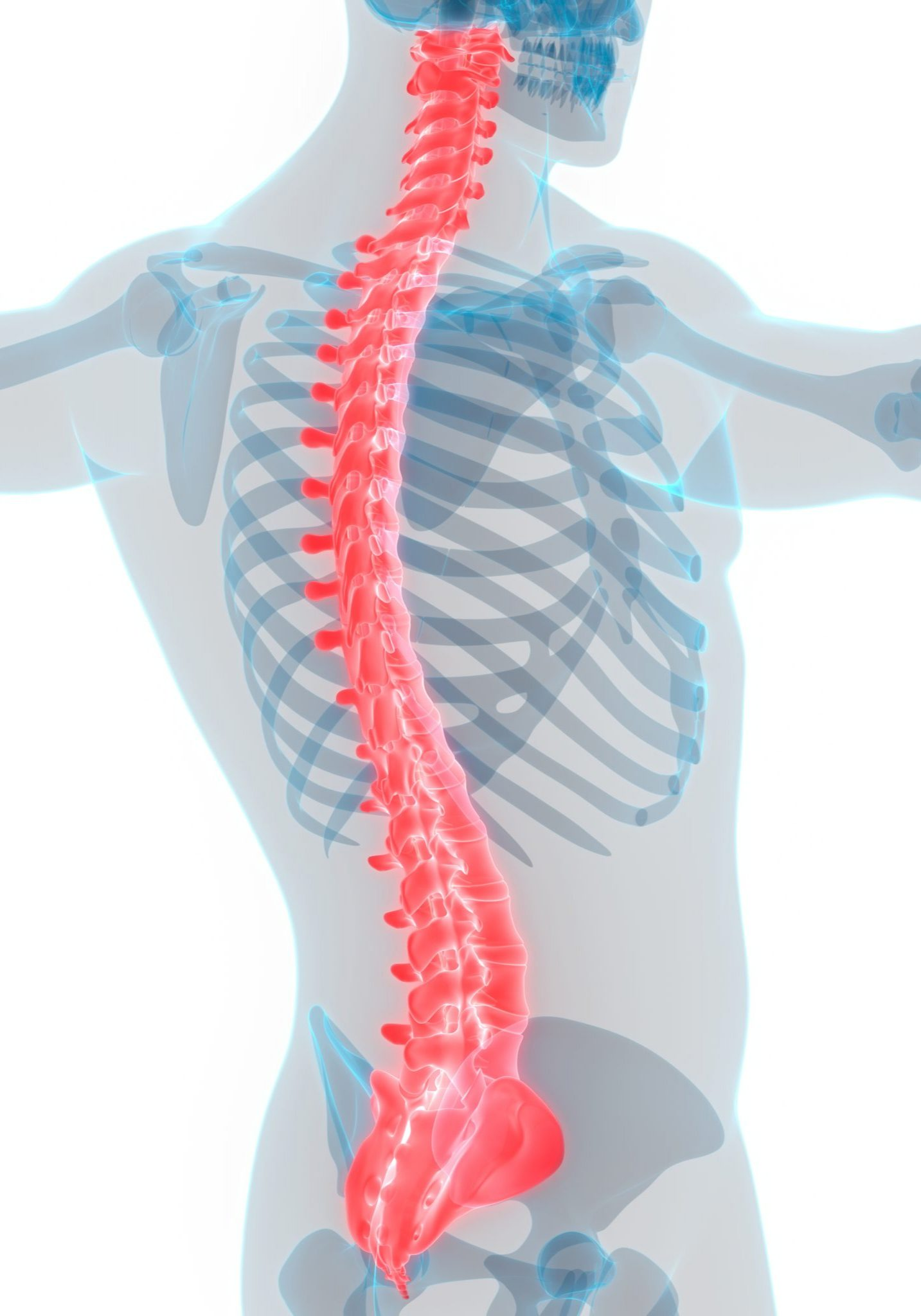 Chiropractic Spine Graphic